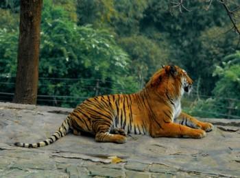 ¥260 元起 永川野生动物园是亚洲最大的野生动物世界.