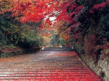 三峡红叶往返4大地棋牌游戏