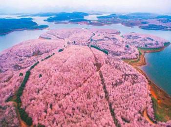 (三日樱花)贵州平坝万亩樱花、安顺龙宫、篝火晚会汽车三乐虎国际娱乐app